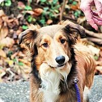 Adopt A Pet :: Tee - Lebanon, CT