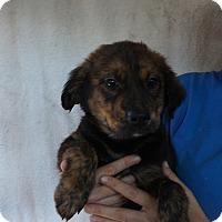 Adopt A Pet :: Jeffery - Oviedo, FL