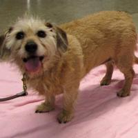 Adopt A Pet :: Coco - Twinsburg, OH