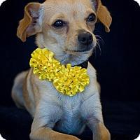 Adopt A Pet :: Lexie - Phelan, CA