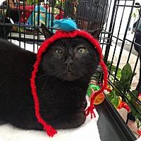 Adopt A Pet :: Jefferson - Brooklyn, NY