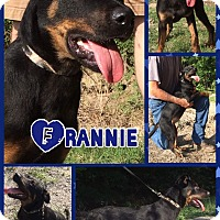 Adopt A Pet :: Frannie - East Hartford, CT