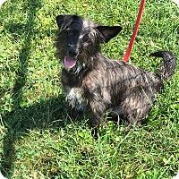 Adopt A Pet :: SEBASTIAN - LaGrange, KY