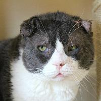Adopt A Pet :: Slugger - Warwick, RI