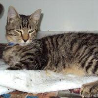 Adopt A Pet :: Carlos - Robinson, IL
