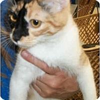 Adopt A Pet :: Anastasia - Dallas, TX