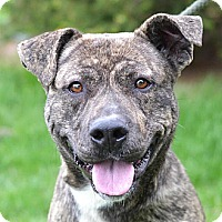 Adopt A Pet :: Gemma - Springfield, IL
