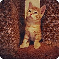 Adopt A Pet :: Cuddles - Ft. Lauderdale, FL