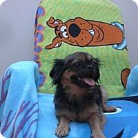 Adopt A Pet :: Bella - Davie, FL