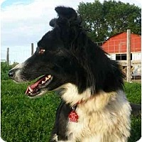 Adopt A Pet :: Clover - Glenrock, WY