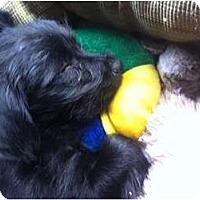 Adopt A Pet :: Francis - Pending - Vancouver, BC