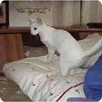 Adopt A Pet :: Smitten - Scottsdale, AZ
