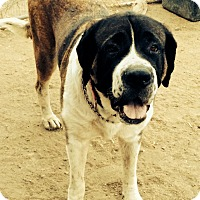 Adopt A Pet :: Sierra - Lake Forest, CA