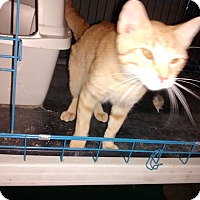 Adopt A Pet :: Blaze - Saint Albans, WV
