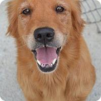 Adopt A Pet :: Birdie - Danbury, CT