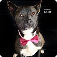 Adopt A Pet :: Keisha - Greenville, SC