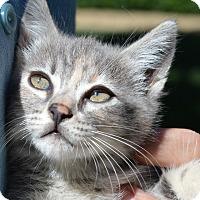 Adopt A Pet :: Celine - Stanford, CA