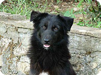 Labrador Retriever Mix Dog for adoption in Toronto, Ontario - Roza