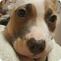 Adopt A Pet :: Chrissy - Savannah, GA
