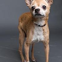 Adopt A Pet :: Skippy - Columbia, SC