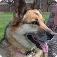 Adopt A Pet :: SOPHIE - Hurricane, UT