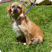 Adopt A Pet :: Pixie - Simi Valley, CA