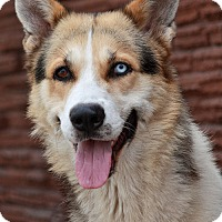 Adopt A Pet :: Blue von Lollar - Los Angeles, CA