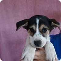 Adopt A Pet :: Kc - Oviedo, FL