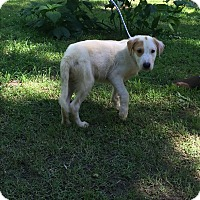 Adopt A Pet :: Cassie - Kittery, ME