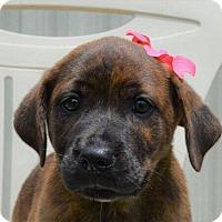 Adopt A Pet :: Frances - Allentown, NJ