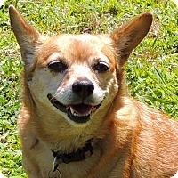 Adopt A Pet :: Sandy Lou - Joplin, MO
