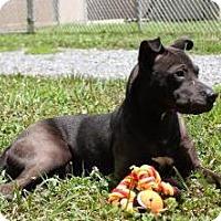 Adopt A Pet :: Annie - Lincolnton, NC
