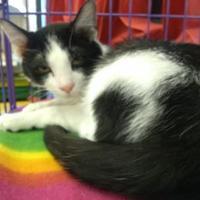 Adopt A Pet :: Tyke - Nicholasville, KY