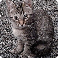 Adopt A Pet :: Kat - N. Billerica, MA