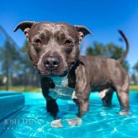 Adopt A Pet :: Ernie - Chicago, IL
