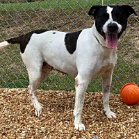 Adopt A Pet :: ALEXIS - Augusta, GA