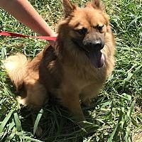 Adopt A Pet :: Finn - East Hartford, CT