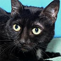 Adopt A Pet :: Jade - Lenexa, KS