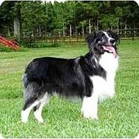 Adopt A Pet :: Tucker - Orlando, FL