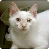 Adopt A Pet :: Spark - Morgan Hill, CA