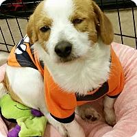 Adopt A Pet :: Graham - Phoenix, AZ