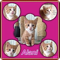 Adopt A Pet :: Alami - Silver Lake, WI