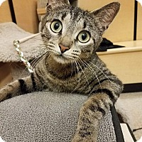 Adopt A Pet :: Nala - McHenry, IL