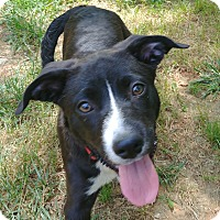 Adopt A Pet :: The Walking Dead: Maggie - Charlotte, NC