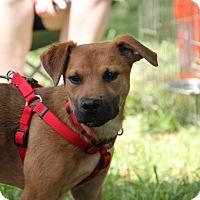 Adopt A Pet :: Piper - Cumming, GA