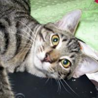 Adopt A Pet :: Killian - Las Cruces, NM