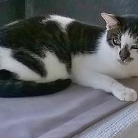 Adopt A Pet :: Benny - Brooksville, FL