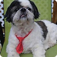 Adopt A Pet :: Warden - Benton, LA