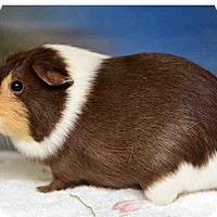 Adopt A Pet :: *Urgent* Marvin - Fullerton, CA