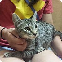 Adopt A Pet :: Nikki - Whittier, CA